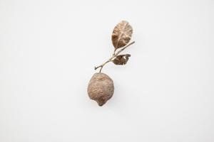 Marco De Sanctis: Vanitas (citron coupé), 2020